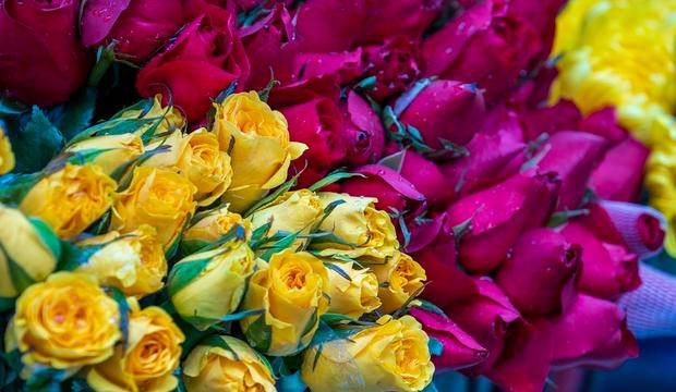 Significado das cores das rosas