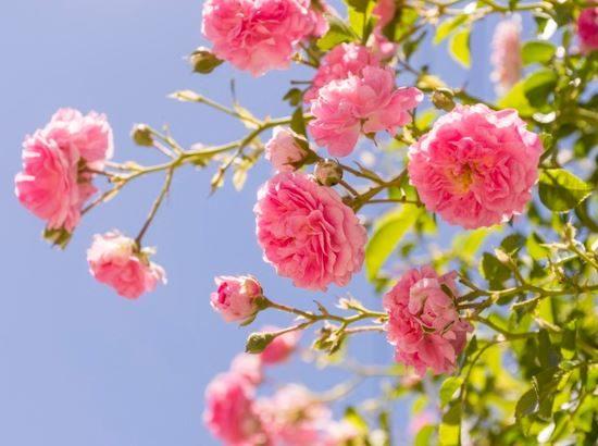 flores de cada estação